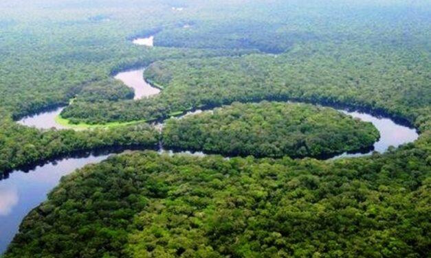 Centrafrique : Global Eco village Network mise sur la participation des femmes dans la gouvernance forestière