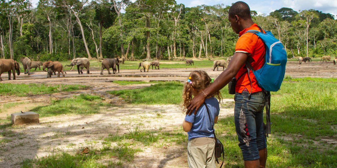 Centrafrique : Relève difficile des activités touristiques à Bayanga