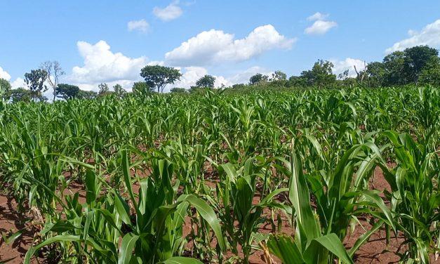 Centrafrique: L'ONG Kizito de Berberati dans la dynamique du développement agricole