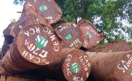 Les Ministres des Forêts de la CEMAC et de la RD Congo diffèrent l'interdiction d'exportation de bois brut en 2023