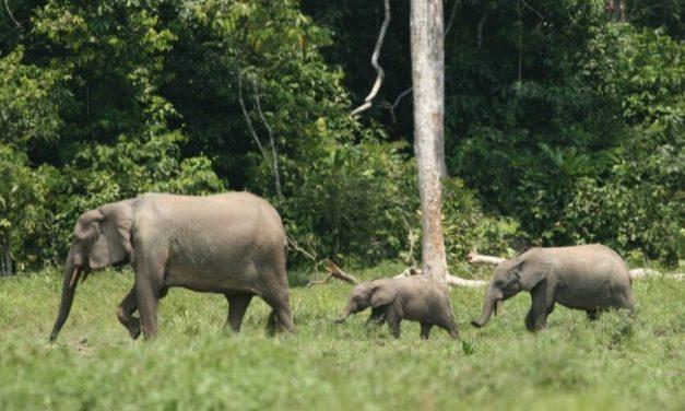 Afrique centrale : Renforcer la gestion communautaire des aires protégées