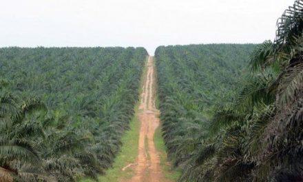 Centrafrique : Privatisation de la Centrapalm: Avis à manifestation d'intérêt